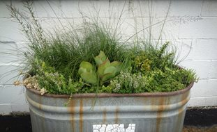 Container Garden Design Ideas find this pin and more on in the garden 1 Garden Design Calimesa Ca