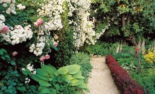 Backyard Garden Design Ideas awesome white green wood cute design new garden landscape deck wood white umbrella grass small graden Small Backyard White Roses Barberry Hedge William Morrow Garden Design Washington Dc
