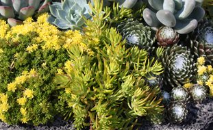 Succulents, Container Debra Lee Baldwin San Diego, CA