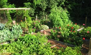 Vegetable Garden Design vegetable garden design permaculture vegetable garden plants uk the garden inspirations Vegetable Gardens Garden Design Calimesa Ca