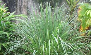 Garden Plants Garden Design