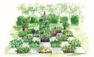 Gardening Design Ideas garden design ideas screenshot Food Garden Drawing Elayne Sears Illustrator