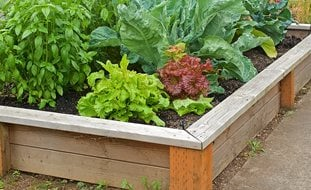 Vegetable Garden Ideas Design Garden Design