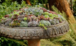 Birdbath Container Sempervivum Pot Incorporated Vancouver Bc Succulent Gardens