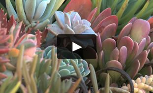 Succulent Video Garden Design Calimesa Ca