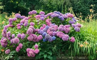 How To Change Hydrangea Color Garden Design