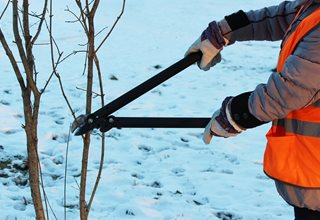 Pruning In Winter, Trimming Trees, Pruning 7 Elegant Watering Essentials Shutterstock.com New York, NY