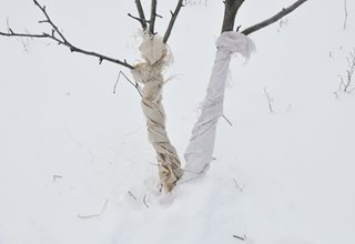 Tree Wraps, Wrapping Trees In Winter, Protecting Trees 7 Elegant Watering Essentials Shutterstock.com New York, NY