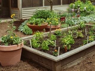 Raised Bed Garden Design How To Layout Build Garden Design