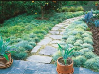 Eco Friendly Lawn Alternatives Garden Design
