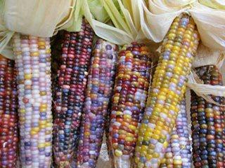 Glass Gem Corn Garden Design