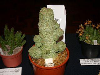 Harry Potter Herbology 101 Garden Design