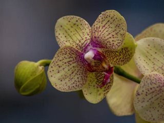 Why Your Orchid Isn T Blooming Garden Design