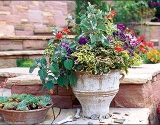 Stretch the Season with Container Plantings Garden Design