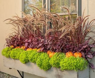 Fall Window Box, Fall Container Plants Proven Winners Sycamore, IL
