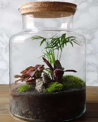 How To Make A Terrarium Diy Terrarium Tips Garden Design