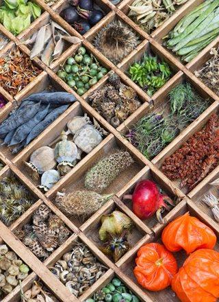 Seed Saving Tips Garden Design