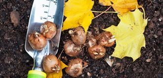 Fall Bulb Planting  10 Great Outdoor Fireplaces Alamy Stock Photo Brooklyn, NY