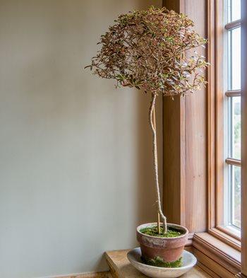 Care Tips For Indoor Topiary Garden Design