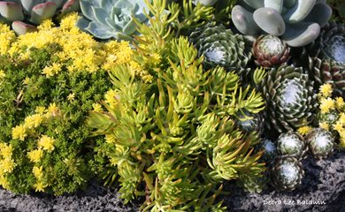 How To Care For Succulents Garden Design