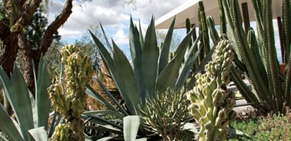A Waterwise Cactus Garden, Photo Gallery Lari Pittman (Homeowner) Los Angeles, CA