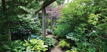Shade Garden Pictures Marjorie Harris Designs Toronto ON