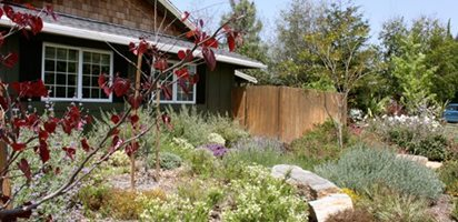 Front Yard Meadow Garden Design Calimesa, CA