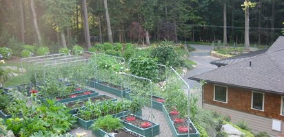 Tiers of Vegetables in New York  Nancy Hallberg (Homeowner) Waccabuc, NY