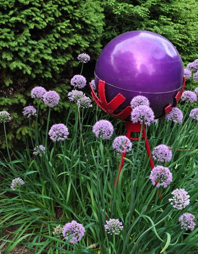 "06_purple_globe__alliums_pampenick_bedrockgardens ""Dream Team's"" Portland Garden Garden Design Calimesa, CA"