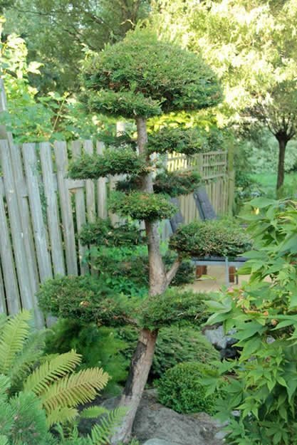 "Bonsai Tree ""Dream Team's"" Portland Garden Garden Design Calimesa, CA"