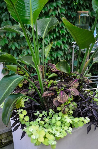 Container Garden Combinations | Garden Design. Garden Design - garden design website