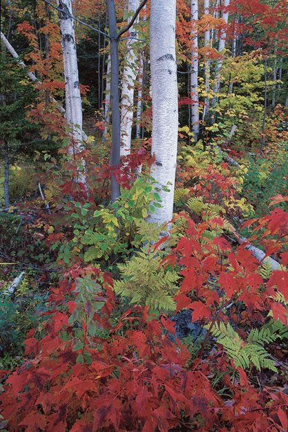Top Trees For Colorful Fall Foliage Garden Design