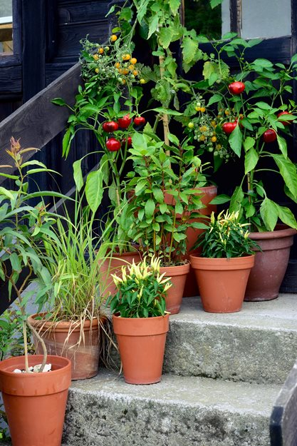 container vegetables small space vegetables garden design calimesa ca - Small Vegetable Garden Ideas