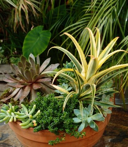 Haute Houseplants Garden Design Calimesa, CA