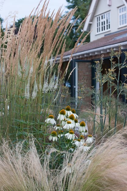 Mexican Feather Grass, Plant Combinations Garden Design Calimesa, CA