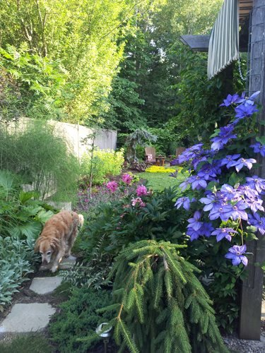 Sideyard With Stepping Stone Pathway Candace Mallette Landscape & Garden Design Ottawa, ON