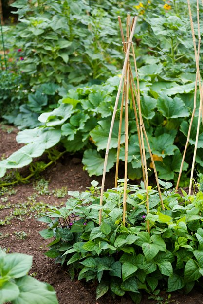 small garden vegetable tepee garden design calimesa ca - Garden Design Vegetable