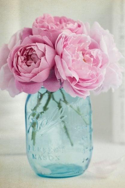 """Rosas en tarro de cristal, rosas rosadas""""Equipo de ensueño"""" Portland Garden Shutterstock.com Nueva York, NY"""