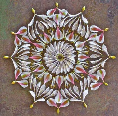Art Botany Flower Mandalas Garden Design