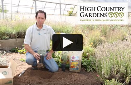 High Country Lavender  Video Garden Design Calimesa, CA