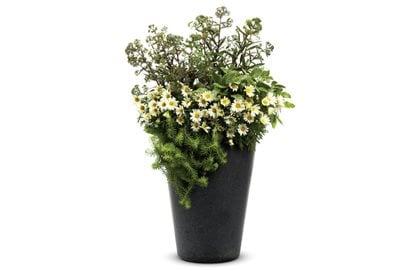 180 & Sedum - Grow Stonecrop Plants and Sedum Ground Cover ...