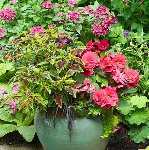 Shade Container Plants Janet Loughrey ,
