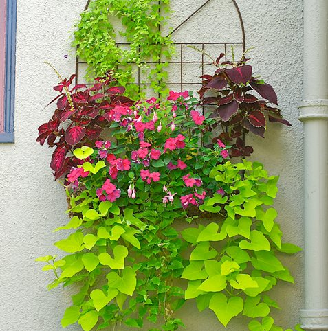 Wall Planter Janet Loughrey ,