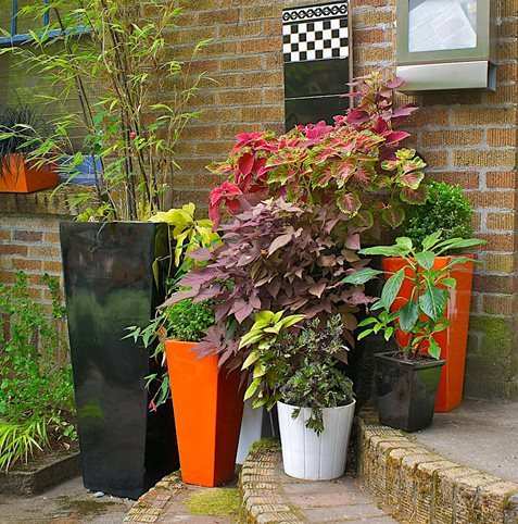 container gardens made for the shade  garden design, Natural flower
