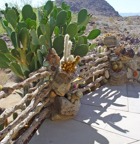 Best Water Wise Desert Plants Garden Design