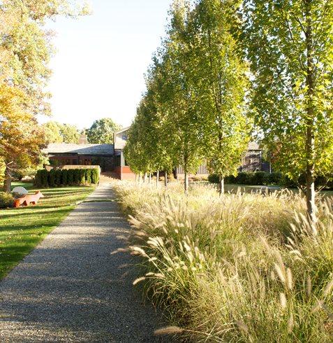 Garden trees garden design for Landscape trees
