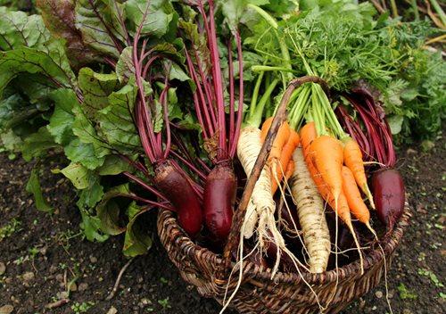 June Gardening Checklist for Seattle
