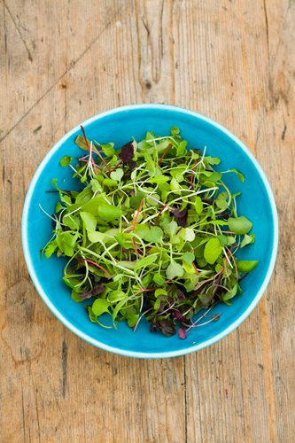 How To Grow Your Own Microgreens Garden Design