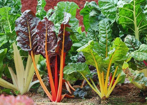 June Gardening Checklist for Los Angeles