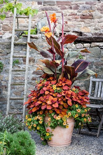 5 Stunning Summer Container Ideas Garden Design
